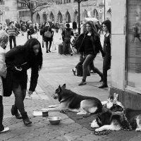 Бездомные :: Elen Dol