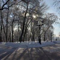 Дорожки в зимнем парке :: Сергей Тагиров