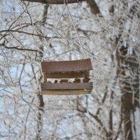 Кормушка для птиц :: Сергей Тагиров