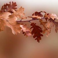 февраль-прошлогодние листья :: георгий петькун