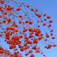 Красное на голубом . :: Мила Бовкун