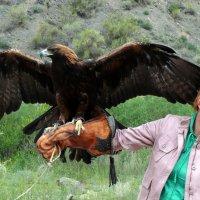 В каньоне у реки Чарын туристам предлагают сфотографироваться с беркутом :: Асылбек Айманов