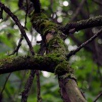 velvet tree :: Сара Лала