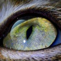 кошачий глаз :: Седа Ковтун