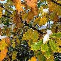 зимы начало 3 - дуб еще листву не сбросил :: Galina