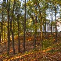 Осень. :: Евгений Кузнецов