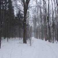 Зимний лес :: Валюша Черкасова