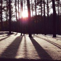 Зимний лес в лучах солнца :: Tuchka Tuchka