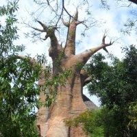 Дерево :: Irine kolesova