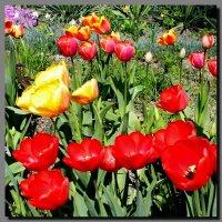 У дома. Весна. :: Ivana