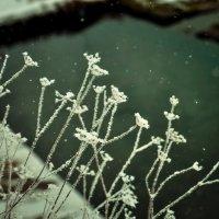 последние зимние деньки :: Тася Тыжфотографиня