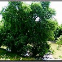 У  реки.  Лето. :: Ivana