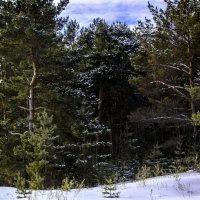 Морозным днем :: Виктор Штабкин