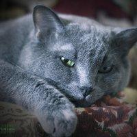 Серый :: D. Matyushin.