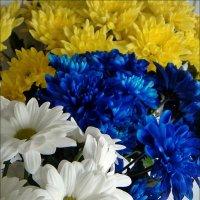 Хризантемы. Три цвета :: Нина Корешкова