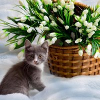 Весна :: Cергей Александров