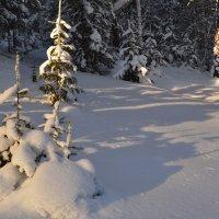 На зимнем солнце :: Татьяна Соловьева