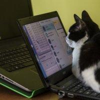 Кошка и компьютор :: Сергей Волков