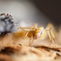 Из жизни муравьев :: Аркадий Назаров