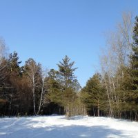 На лесной поляне . :: Мила Бовкун