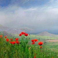 синеют холмистые дали сквозь алые лики цветов :: viton