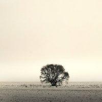 Belarusian tree :: Никита
