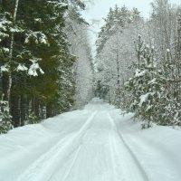 После снегопада-прогулка по лесу.. :: Алла Кочергина