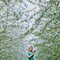 spring :: Freol Freol