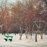 Зимний вечер в городском парке. :: Геннадий Комиссаров