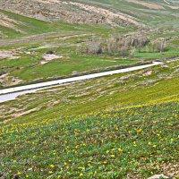 весна в горах Памира..... :: Юрий Владимирович