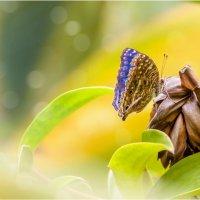 Красавица с острова Маврикий!!! :: Александр Вивчарик