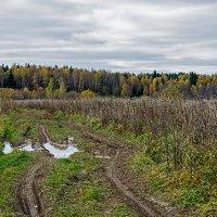 Осенняя дорога :: Galina
