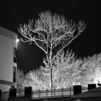 Просто дерево :: Aleh Nekipelau