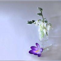 Глоточек весны :: Olenka
