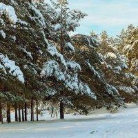 Зимний парк :: Дмитрий Конев