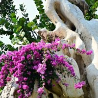 и на камнях растут... цветы :: Дмитрий Боргер