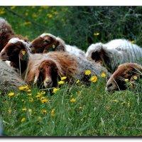 В глубокой траве. :: Leonid Korenfeld