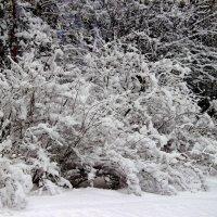 Февраля последний снегопад... :: Лесо-Вед (Баранов)