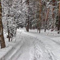 Уже под снегом талая водица... :: Лесо-Вед (Баранов)