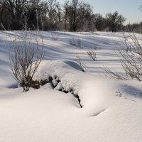 Снежный покров :: Андрей Зайцев