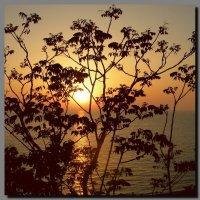 Море.  Закат. :: Ivana