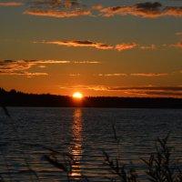 Сиверское озеро.Закат :: Светлана Ларионова