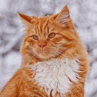 Растем  и  мужаем,  чужих  котов  гоняем! :: Валера39 Василевский.