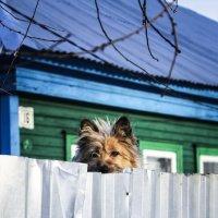Любопытство :: Ольга Мансурова