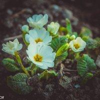 Февраль :: Олеся Енина