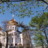 весна идет :: Олег Лукьянов