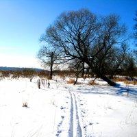 Лыжный отдых. :: Александр Атаулин