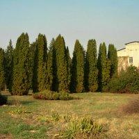 Ботанический сад Алматы. :: Murat Bukaev