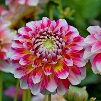 Все цветы красивы и милы... :: Mari Kush