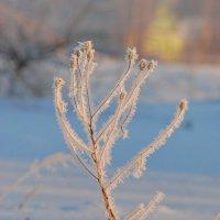 Морозным утром :: Валерий Толмачев